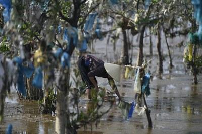 Hình minh hoạ. Hình chụp hôm 18/5/2018: một người phụ nữ đang nhặt vỏ trai tại một rừng ven biển bị ô nhiễm với rác thải nhựa ở tỉnh Thanh Hoá