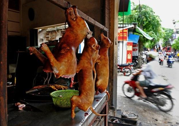 Hình chụp hôm 26/7/2012. Thịt chó được bày bán tại một cửa hàng ở Hà Nội