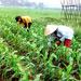 Đa dạng hóa nông nghiệp