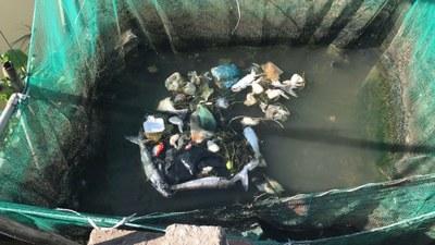 Cá chết vì nước sông ô nhiễm.