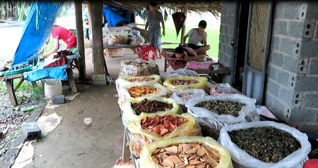 Thuốc Nam ở chợ Đồng Khê, Yên Bái