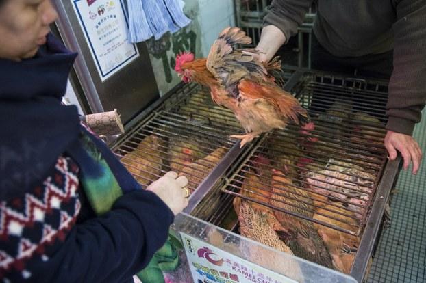Mua bán gà sống ở Trung Quốc
