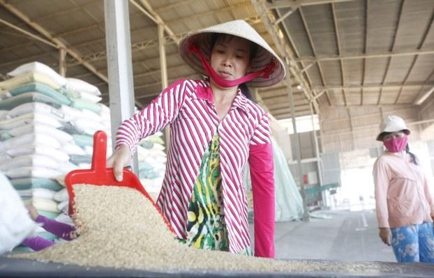 Một nhà máy chế biến lúa gạo tại Cần Thơ.
