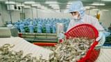 Khâu chuẩn bị tôm xuất khẩu trên một dây chuyền chế biến tại Nhà máy chế biến thủy sản Kim Anh ở tỉnh Sóc Trăng, ngày 21 tháng 2 năm 2004.